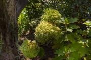5-giardino-romantico-img-5