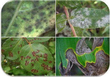 la-diagnosi-delle-malattie-delle-piante